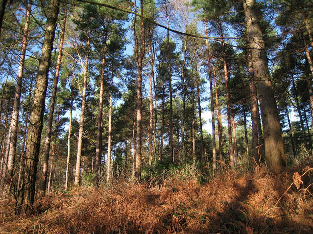 Bedgebury Forest and National Pinetum